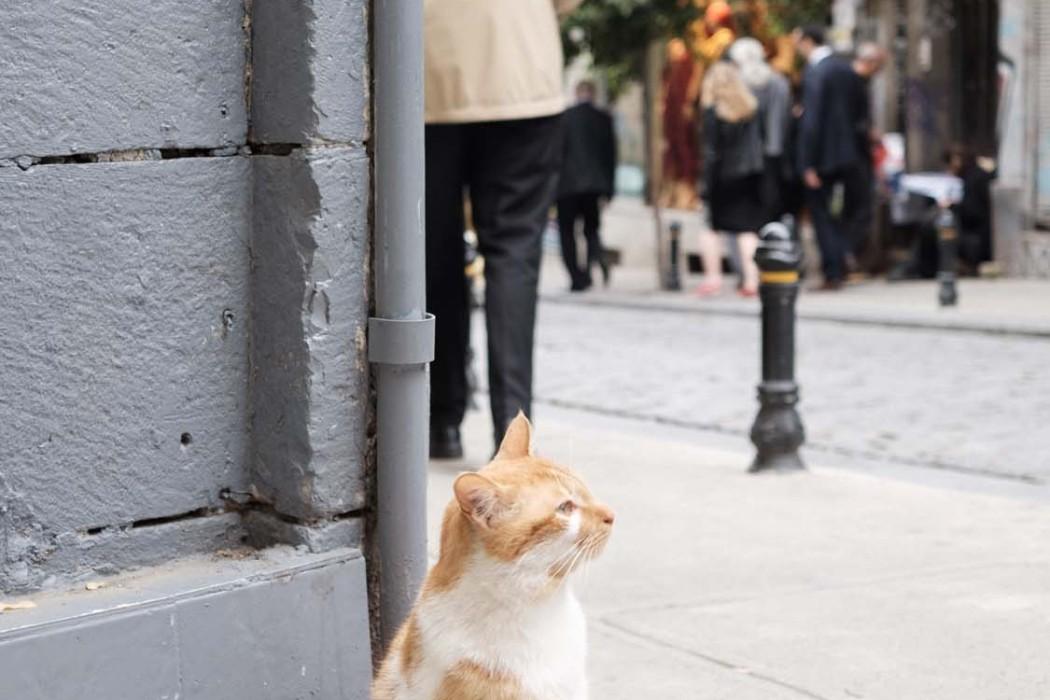 GG-CatsOfTurkey_HeatherLighton_DSF1838