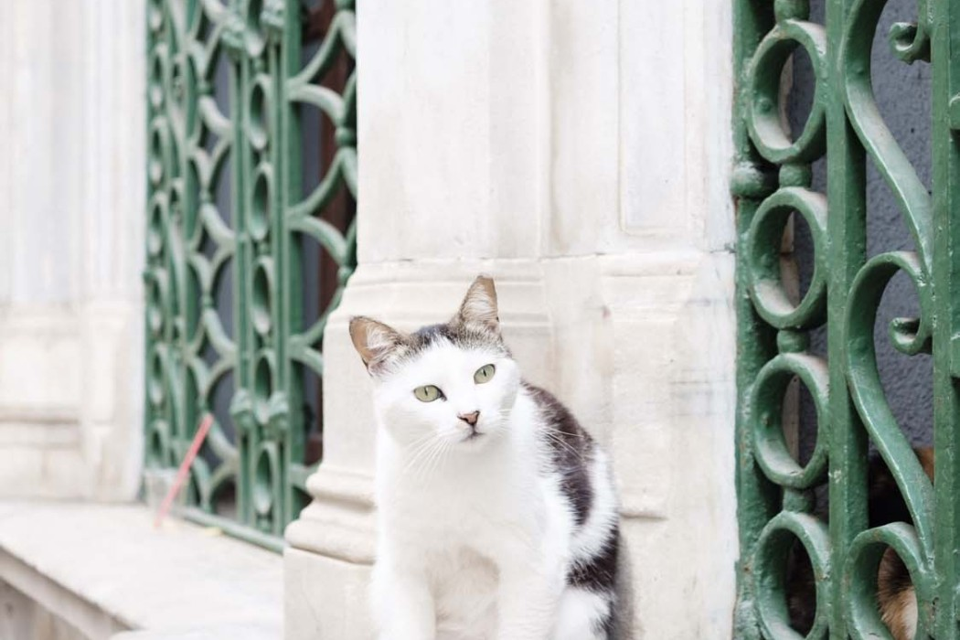 GG-CatsOfTurkey_HeatherLighton_DSF1864
