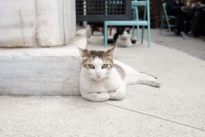 The Happy Street Cats of Turkey