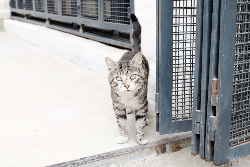GG-CatsOfTurkey_HeatherLighton_DSF1960