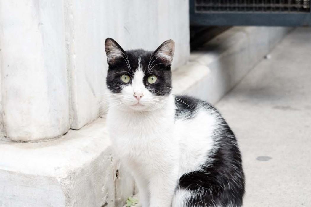 GG-CatsOfTurkey_HeatherLighton_DSF1966