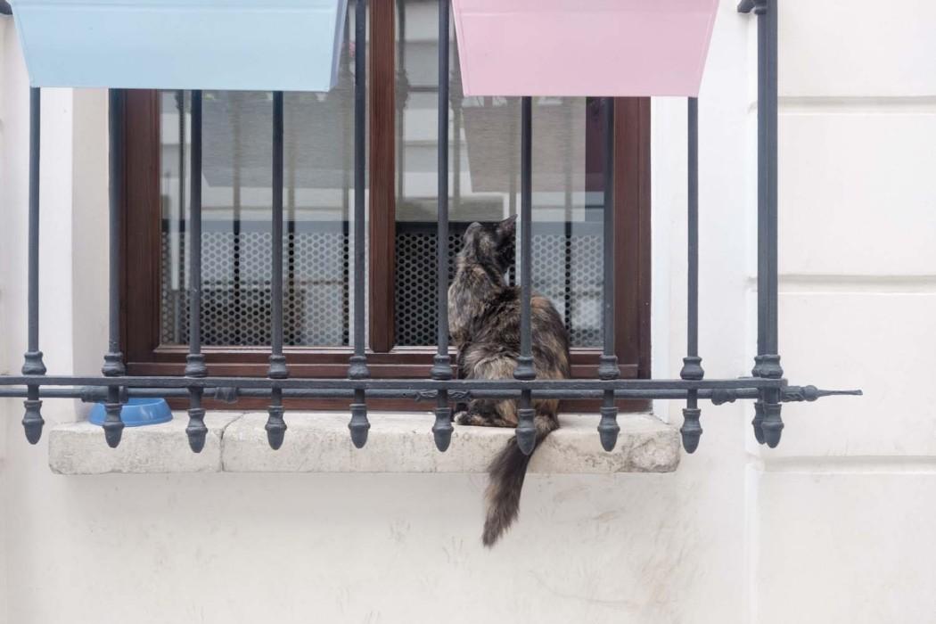 GG-CatsOfTurkey_HeatherLighton_DSF2111