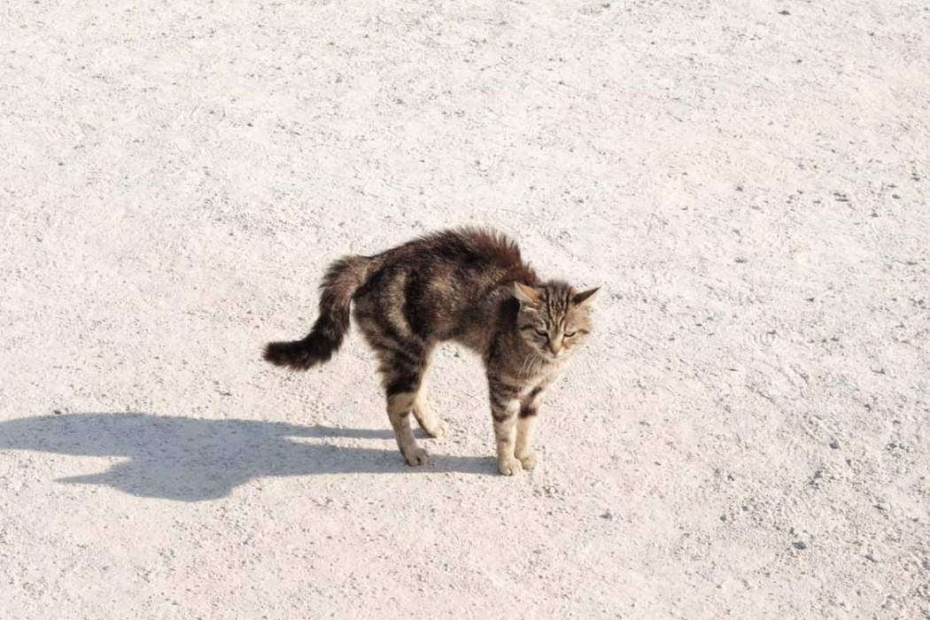 GG-CatsOfTurkey_HeatherLighton_DSF3381