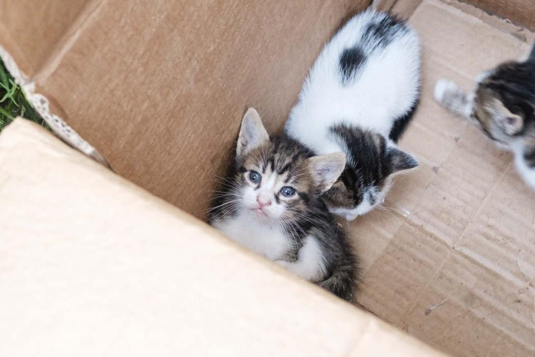 GG-CatsOfTurkey_HeatherLighton_DSF3454